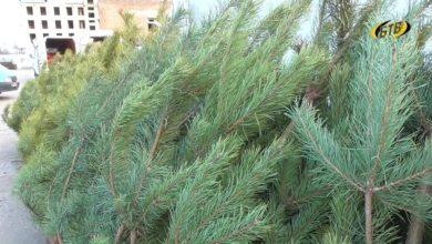 Photo of В лесу она росла