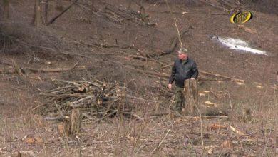 Photo of Вырубка деревьев приостановлена