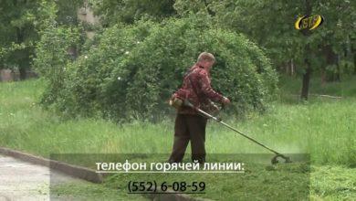 Photo of На дворе – трава