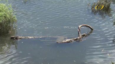 Photo of Вода прохладная, но грязная