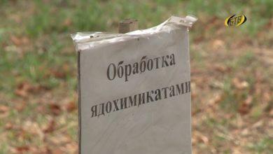 Photo of Амброзия: пресечь на корню