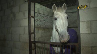 Photo of Что бы подарить… лошади?