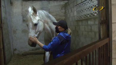 Photo of Лошадь – лекарь души и тела
