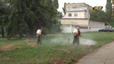 Photo of На дворе трава