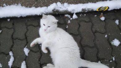 Photo of Снег растаял, воспоминания остались