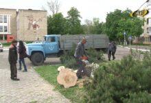 Photo of Посадить молодые деревья – дать новую жизнь улице