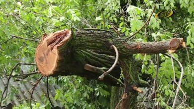 Photo of Ураган обошел стороной
